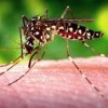 Anti-Influenza Compounds Might Protect From Zika