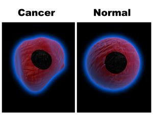 Image result for cancer cells vs normal cells